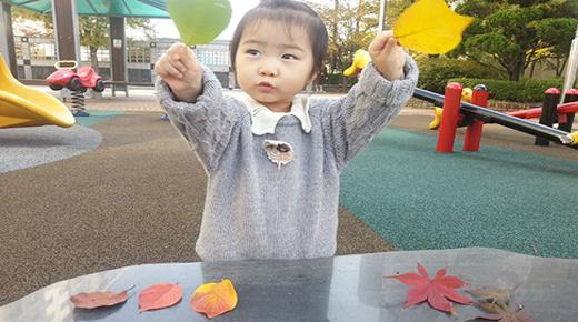 알록달록 낙엽이 있어요